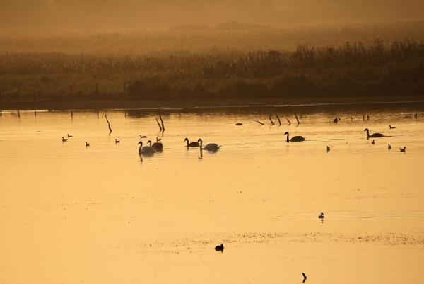 Misty sunrise at the duck pond. by ScottishHaggis