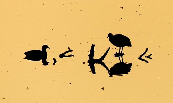 More ducks by ScottishHaggis