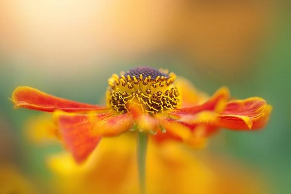 Autumn Queen by jackyp