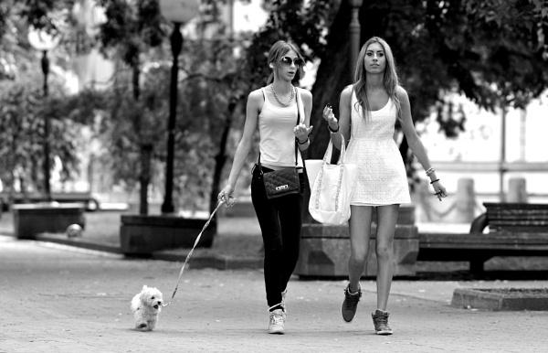 Small white dog by jovanovic
