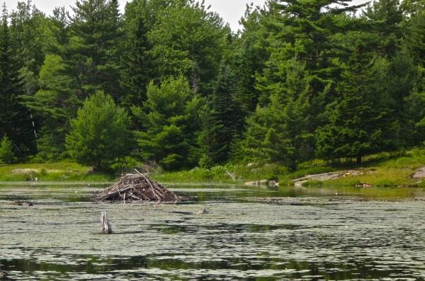 Summer in Maine # 37 by handlerstudio