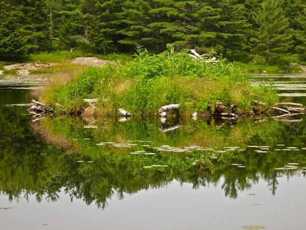 Summer in Maine # 38 by handlerstudio