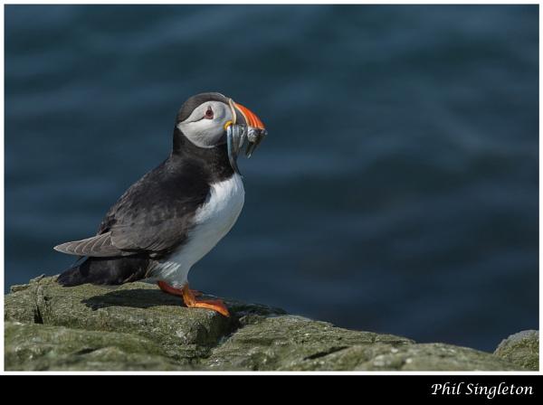 A Beak Full by PhilSingleton