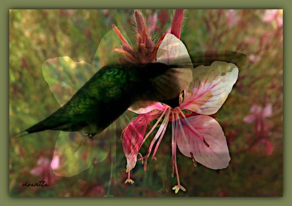 Hummingbird delight by doerthe
