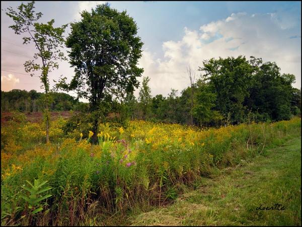 Field of wild sunflowers by doerthe