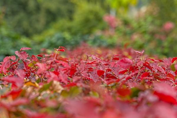Autumn leaves by kuipje