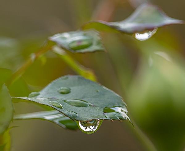 Raindrops (keep falling on my head) by kuipje