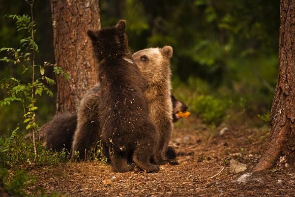 Bear Necessities. by rontear