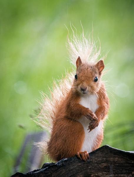 Damp Squirrel by jasonrwl