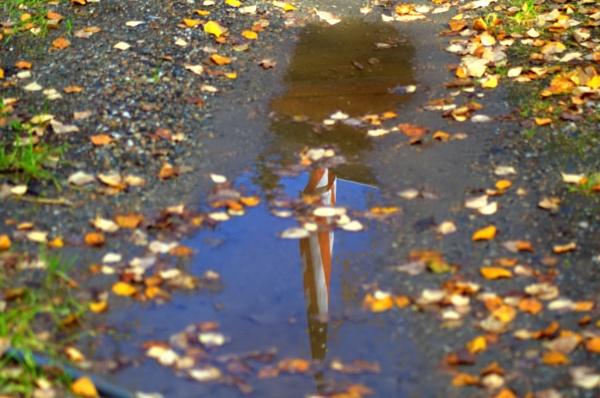 Reflected Glory by Rebeak