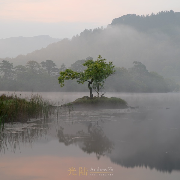 The Lone Tree of Rydal by awhyu