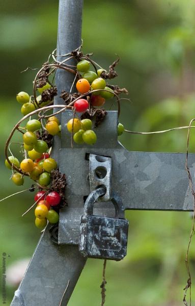 Organic circuit breaker by annettep38