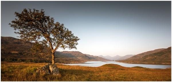 Tree of Stone by PaulMillar