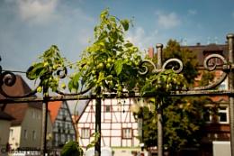 Impressions around Forchheim