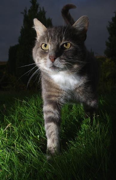 Night hunter by turniptowers