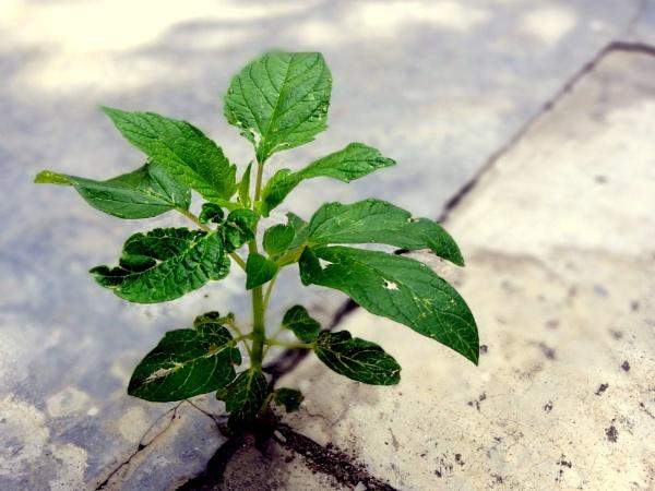 A Plant of Life by IshanPathak