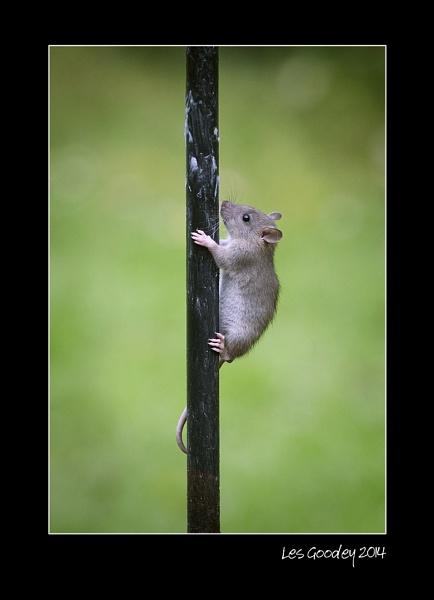 Greasy Pole by lesgoodey