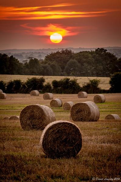 Harvested by DavidLaverty