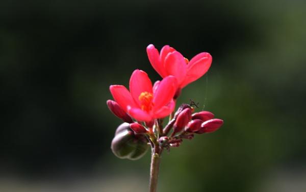 Flower by prabhuv