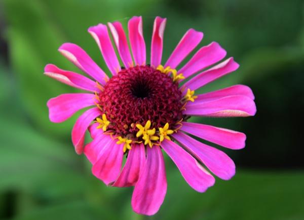 Pink by prabhuv