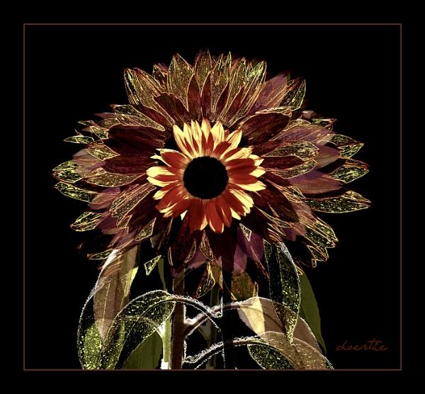 Sunflower Frenzy by doerthe