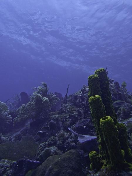 landscape under sea