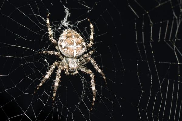 Arachnid by Teaka53