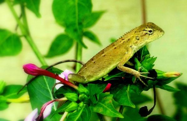 Chameleon by IshanPathak