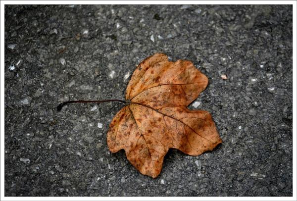 Lonely leaf by alan2603