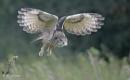 European Eagle Owl (c) by VinceJones