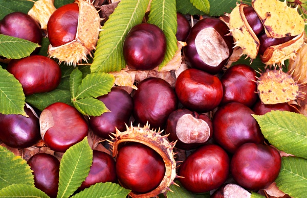 Conkers, by Freila