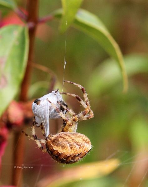 Tangled Web by kaz1