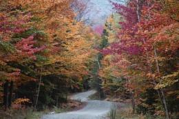More Vermont Foliage