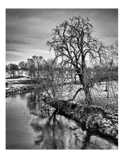 Winter Tree, Doune, Scotland by Rab90