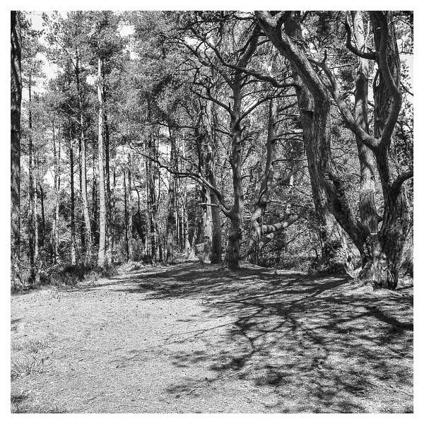 Keir Lochside, Devilla Forest, Fife. by Rab90