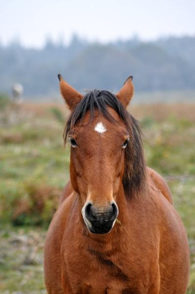 Horse by Captsaigon