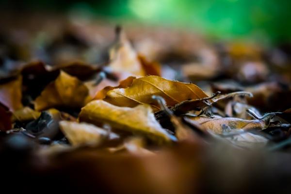 Autumn Leaf by nikonuseruk