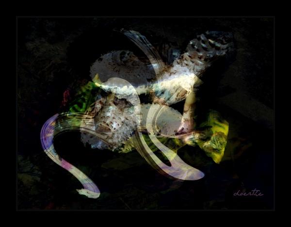 Toadstools in my Garden by doerthe