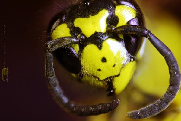 Macro Wasp by clausaresu