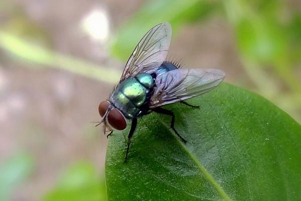 Fly..! by IshanPathak