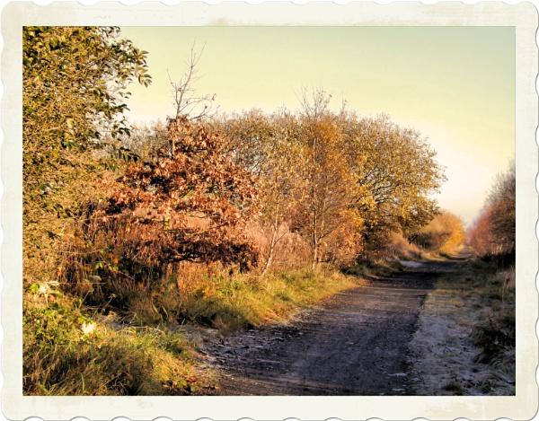 Autumn Gold by alancharlton