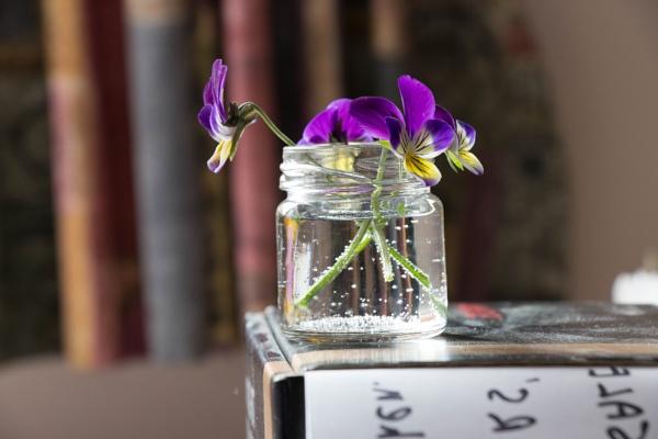 Flowers by CambridgeScene
