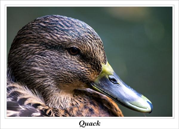 Quack by cantona43