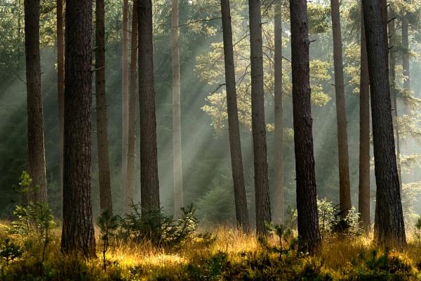 Knightwood Oak by PLCimagery