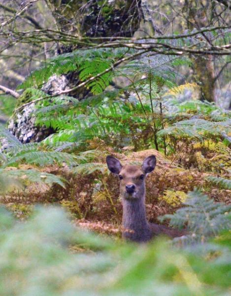 Watcher in the Woods by IOWAndy