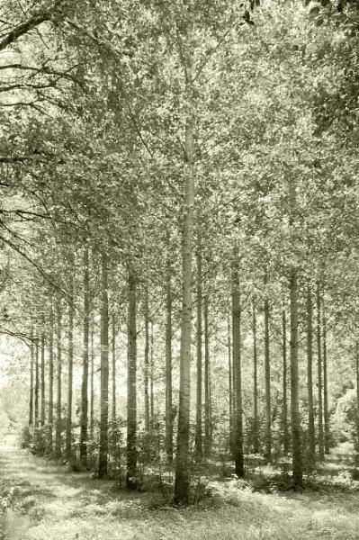Woodland by shawy