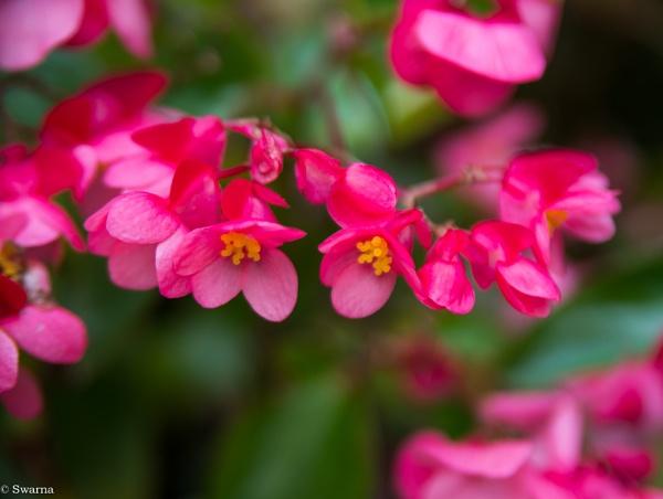 Macro Shot - Floral XII by Swarnadip