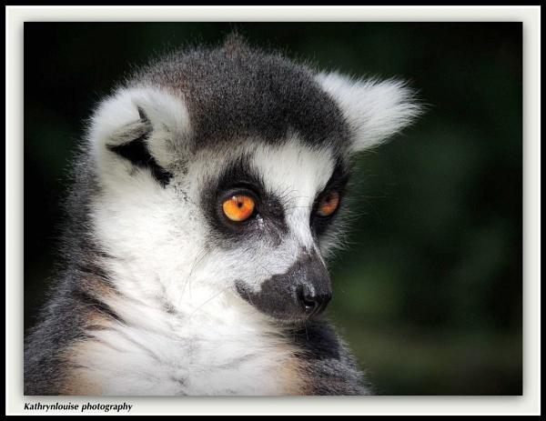 Lemur by kathrynlouise