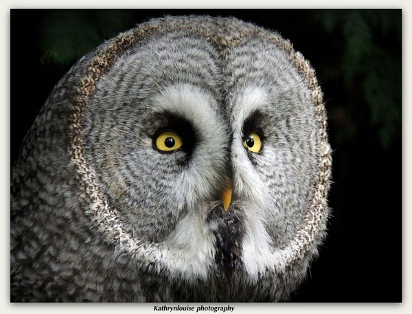 Great grey owl by kathrynlouise