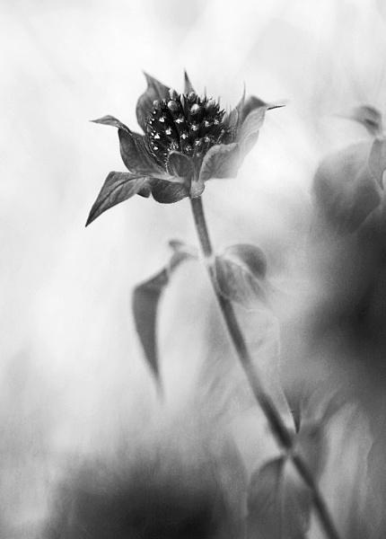 Misty Shrub by Hoverflylover